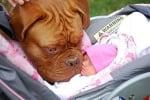 Уникални снимки, доказващи, че кучета и бебета могат да живеят заедно (втора част)