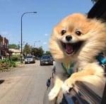 Усмихнато куче