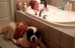 В банята с кучето