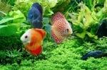 Въглероден двуокис за рибките