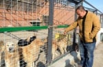 Ван Ян с кучетата