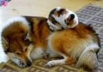 """""""Така си спим в комплект!"""""""