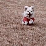 Весело малко кученце