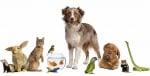 Какви видове домашни или екзотични животни не бива да отглеждаме заедно?