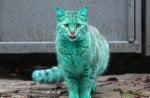 Влязохме в новините по цял свят заради синьо-зелена бездомна котка от Варна