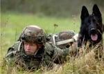 Военна мисия с куче