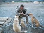 Войник храни кучета