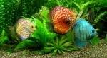 Вреден ли е въглеродния двуокис за рибките