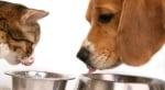 Вредна ли е кучешката храна за котките