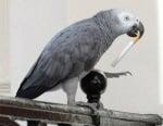 Вредни ли са цигарите за птиците