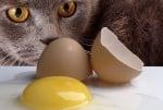 Вредни ли са яйцата за котката