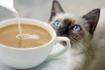 Вредно ли е кафето за котката