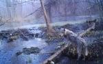 Вълк край реката