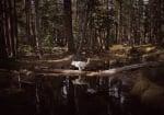 Вълк сред гората