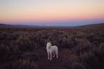 Вълк сред пустоща