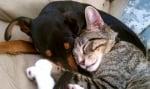 Уинстън котката и Зик кучето