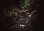 Вълк лежи в гората