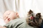 Йоркширски териер с бебе