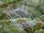 За какво е използвана паяжината?