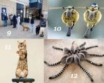 Забавна информация за животните