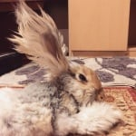 Заек с дълги уши