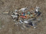 Загинала птица