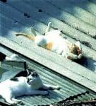 Загряваща поза на сън при котките