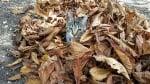 Загубена котка