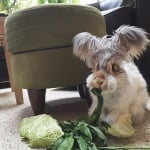 Зайче яде зеле