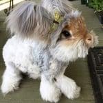 Зайче с панделка