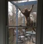 Закачена на прозореца котка