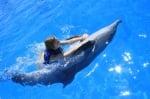 Защо делфините помагат на хората