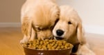 Защо кучето яде извън купичката