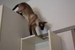 Защо се катерят котките