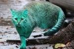 Зелена котка