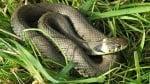 Змии нападнаха Пловдив