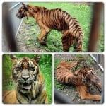 Зоопар на смъртта в Индонезия